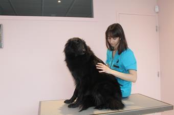 Ostéopathie vétérinaire, Thonon-Les-Bains